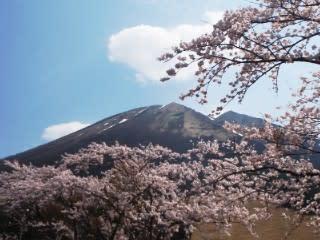 ソメイヨシノ満開4/13現在。圓流院の上棟式は4/8再建8月…?。落書きは3/30。今日4/13は一斉清掃の美化パト。