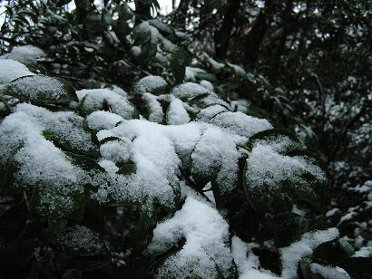 六道山 ハイキング
