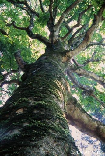 大樹の息吹