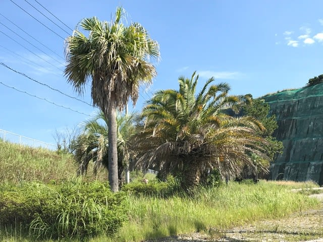 本州最南端の熱帯植物 - 東京シ...