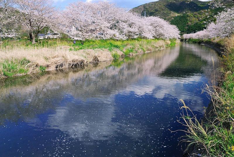 那賀川の春 - To Taste ~ I Lov...
