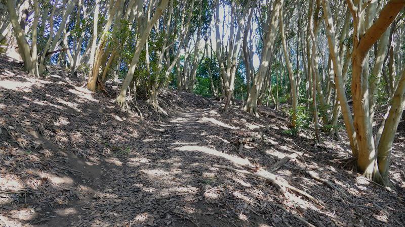 広葉樹の尾根道
