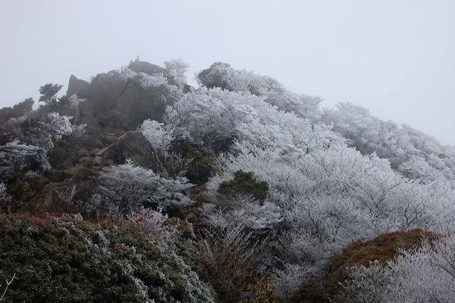 沓掛山の霧氷