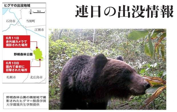 江別 クマ