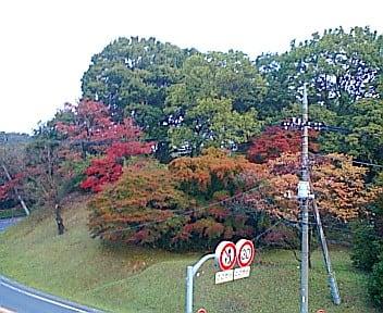 多摩湖 狭山湖 紅葉