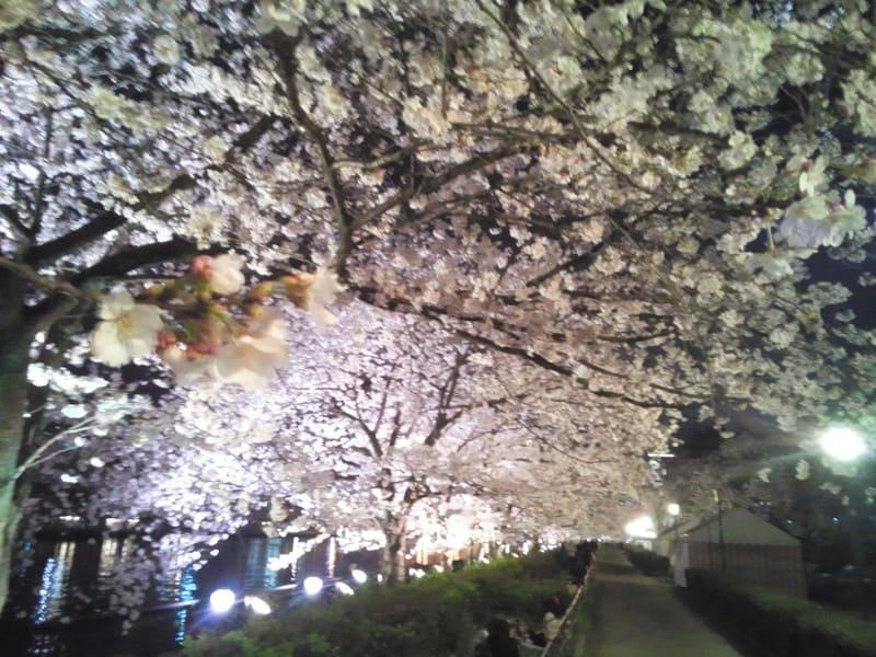 桜好きな方、是非お越しくださいませ!
