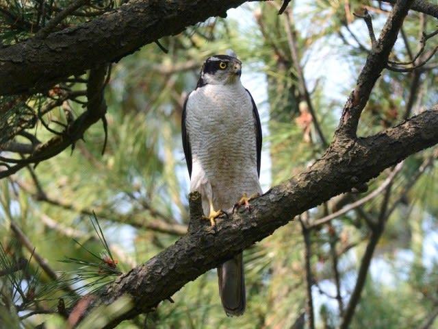 新潟の野鳥・フィールドノート