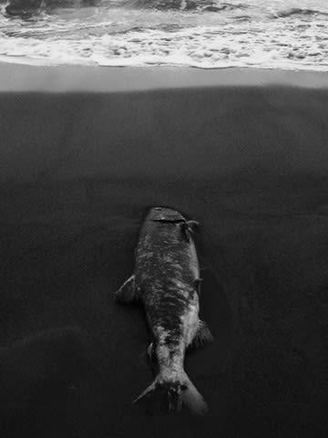 海辺の日常Ⅱ