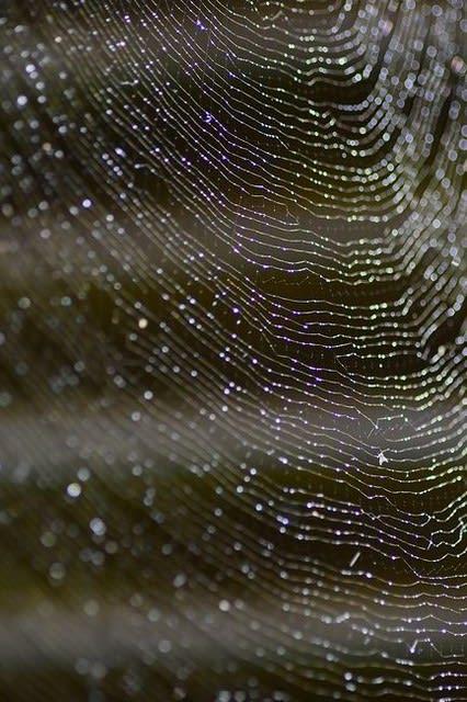 蜘蛛 の 巣
