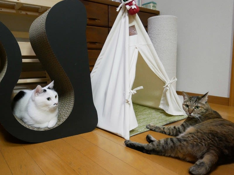 猫こたつはじめましたー☆