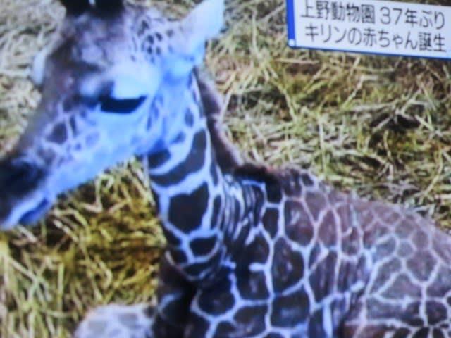 上野 動物園 キリン
