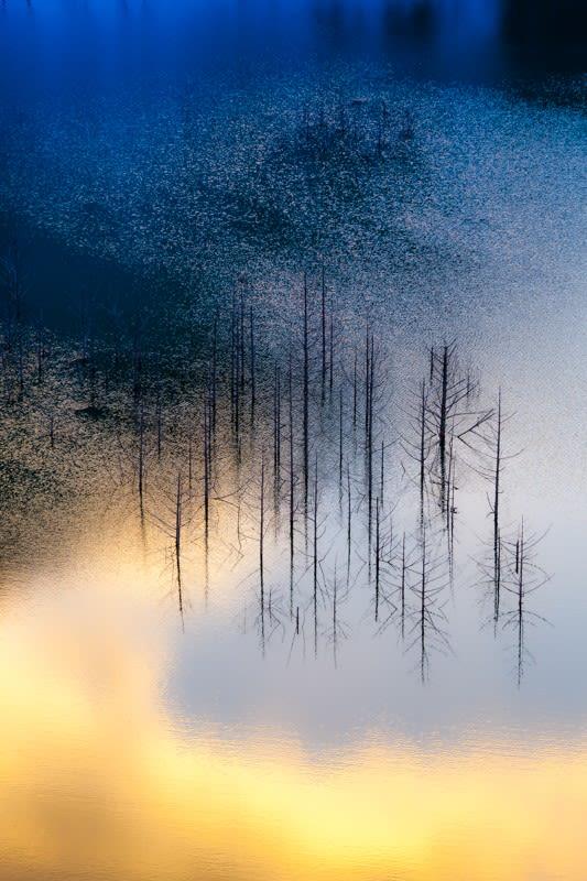 湯西川湖の水没林