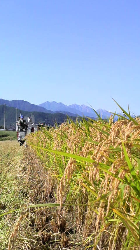 〓実りの秋~稲刈り日和~〓