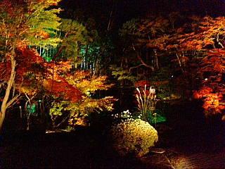 南禅寺のライトアップに来てます