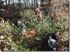 ④住宅に近い常緑樹の間引きと剪定