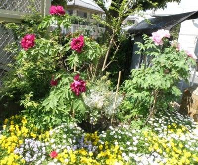 2017年04月26日 4/24 エリア7の花壇とドウダンツツジ