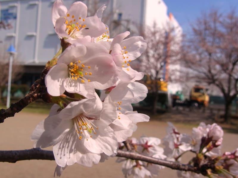 03月28日 松の木島公園