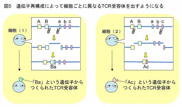 慢性リンパ性白血病 | シスメックスプライマリケア