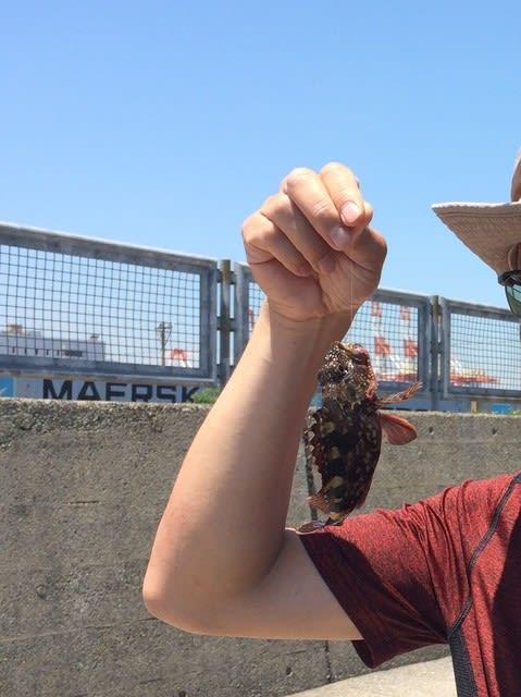 東京湾 ヘチ釣り カサゴ