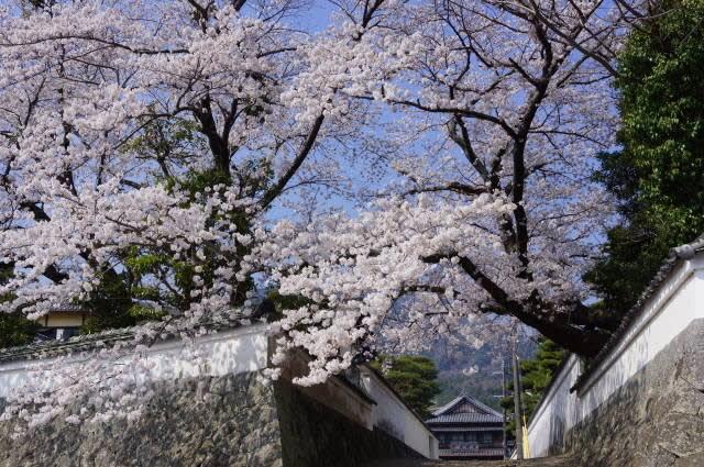 内宮「五十鈴川の桜」見てきました〜(^^)  2018