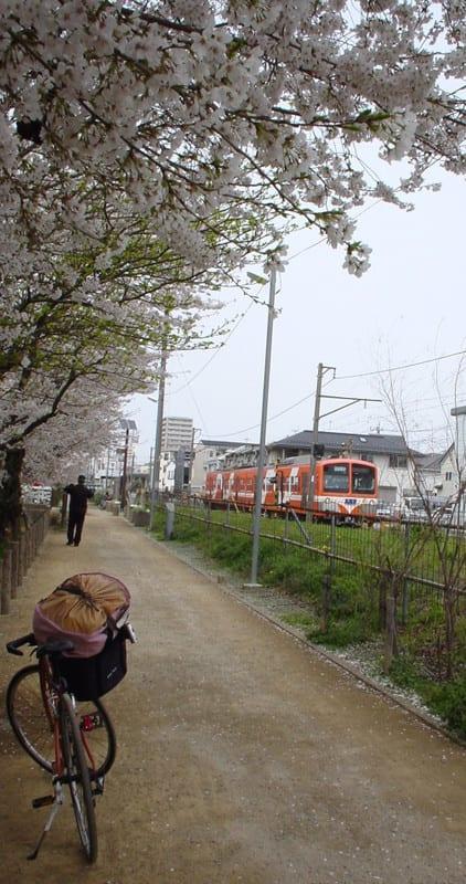 Sakura2013_avec_velo