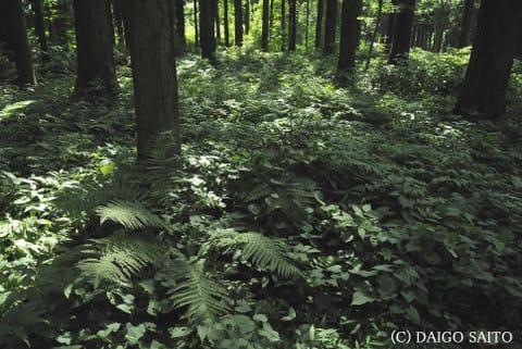森に広がる光