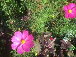 日 植物 短