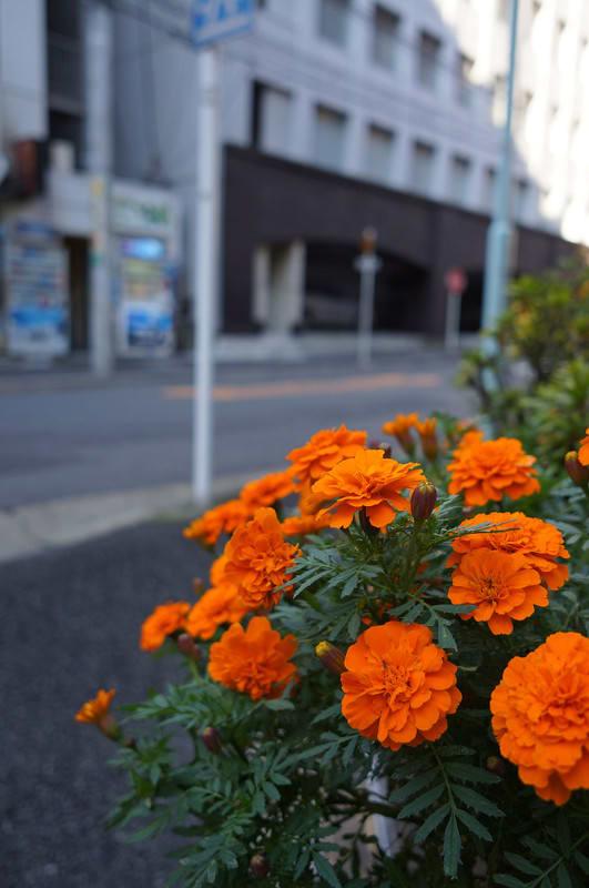 Tokyo131102