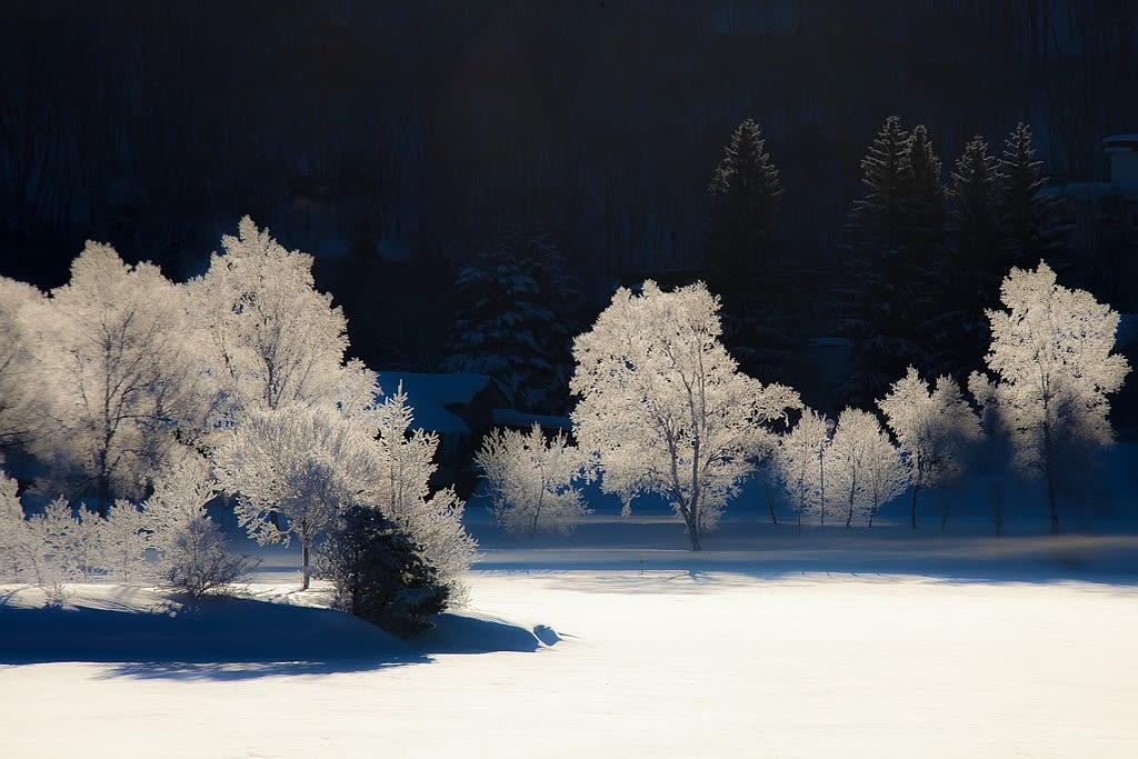白樺湖の霧氷写真