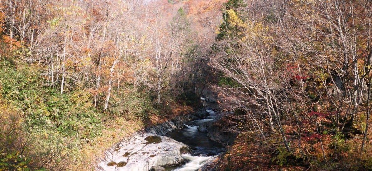 枯葉が落ちれば、狩猟の季節
