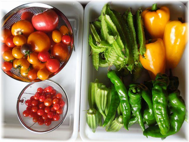 採れたて野菜 2014年8月31日