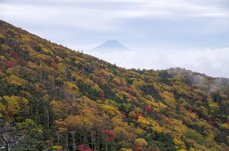 国師ヶ岳の紅葉 - 初心者の写真+