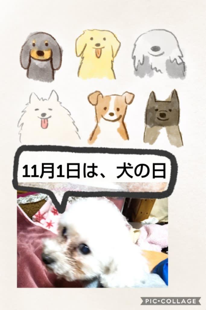 ワンワンワンで犬の日⁉️ - ぷりんちゃん日記