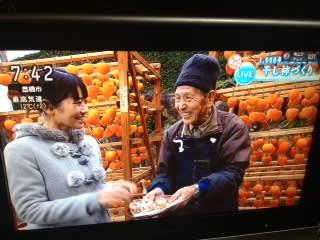 NHK 蜂屋堂上柿