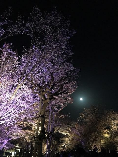 桜狩り 漫画 ネタバレ