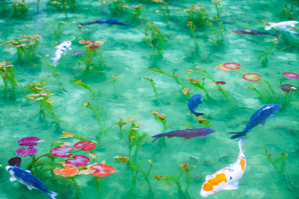 モネの池の写真