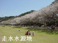 横須賀桜の名所「走水水源地」