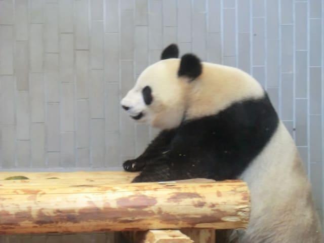 Panda_03
