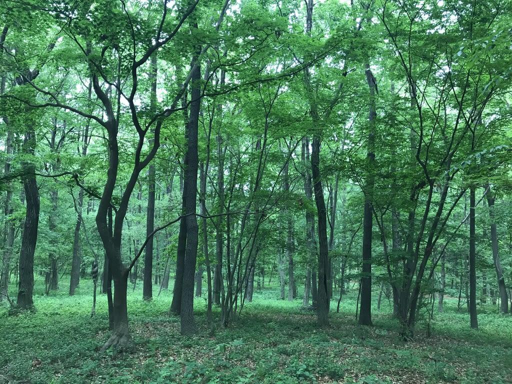 園 赤城 自然