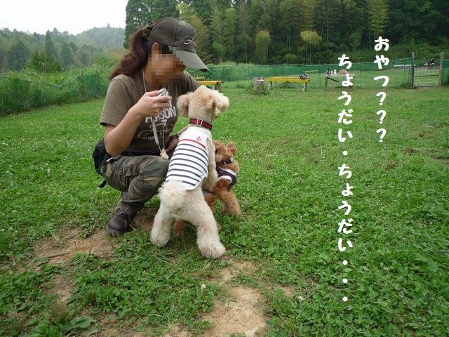 2009年6月のブログ記事一覧(4ページ目)-姫ちゃまのお通りよ