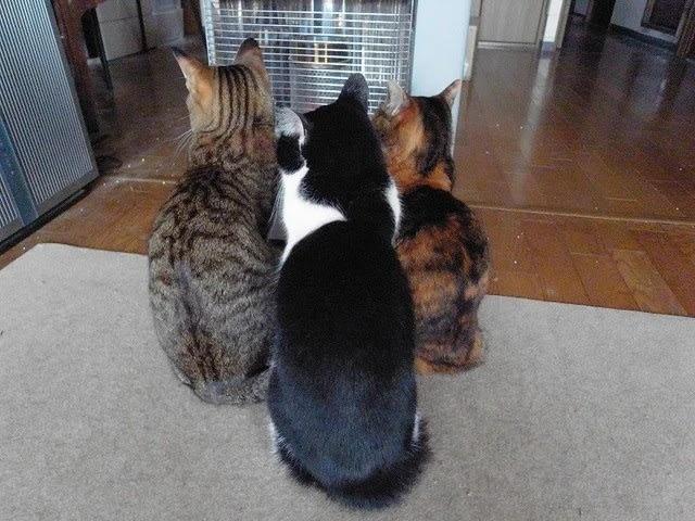 猫3匹が「気をつけ」