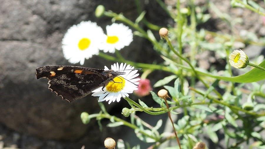 みつい台周辺の花と蝶