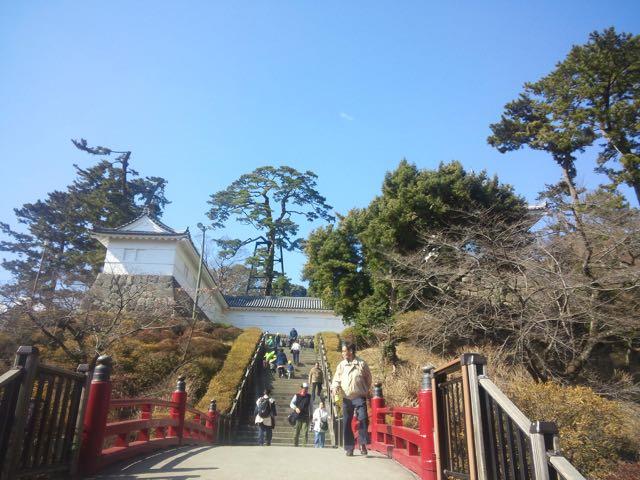 巨木探訪・小田原城の巨松 - あられの日記
