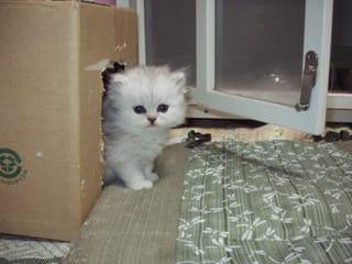 どの子猫ちゃんもかわいい^^