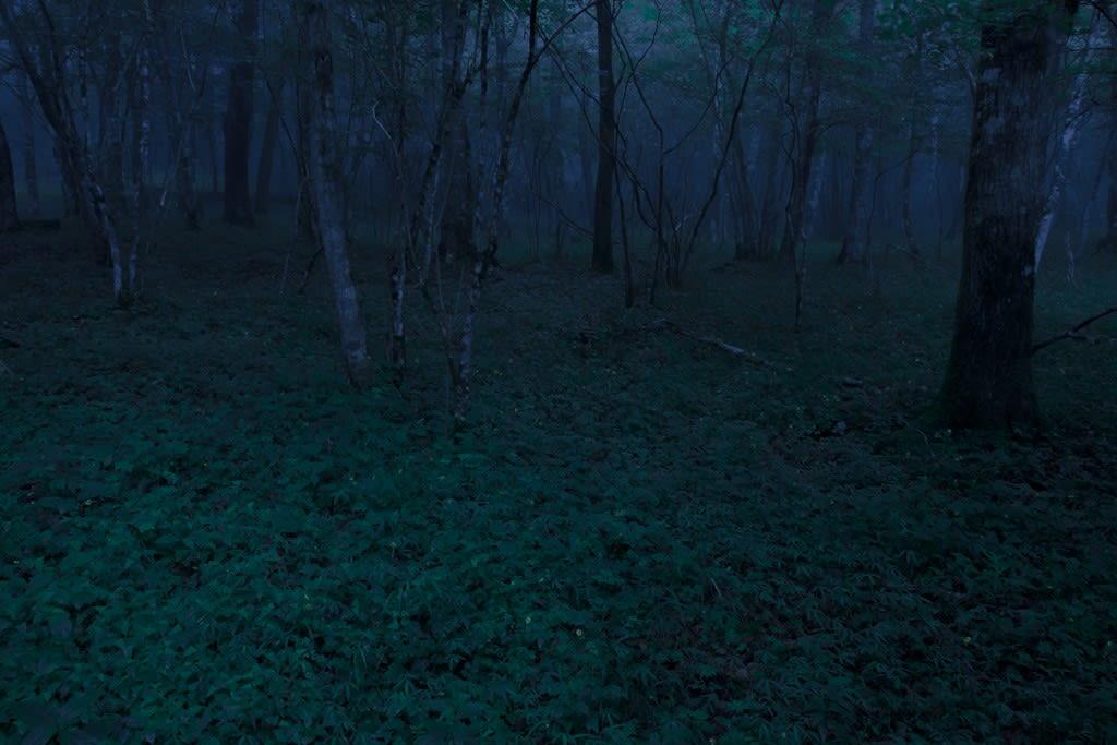 ヒメボタル生息地の写真