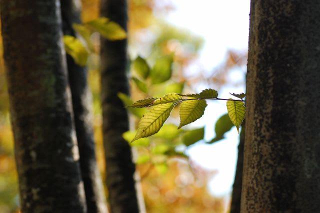 初秋の木立