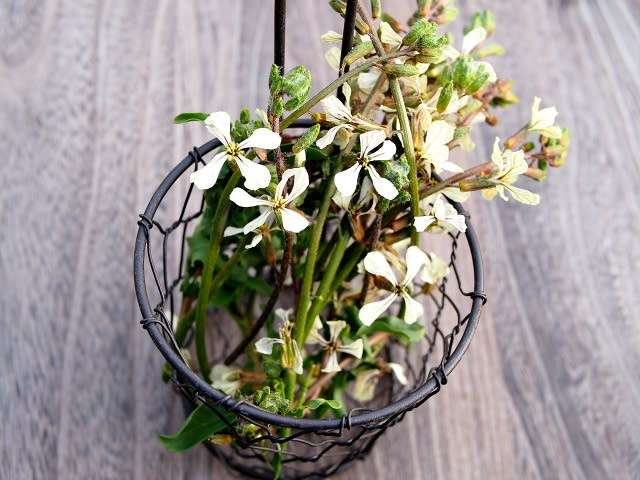 3 サーモンとルッコラの葉、花ルッコラをお皿に盛りつけ、2を添えていただきます。