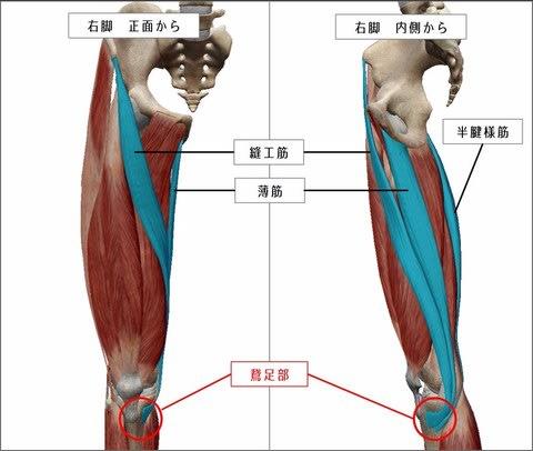 「鵞足」の画像検索結果
