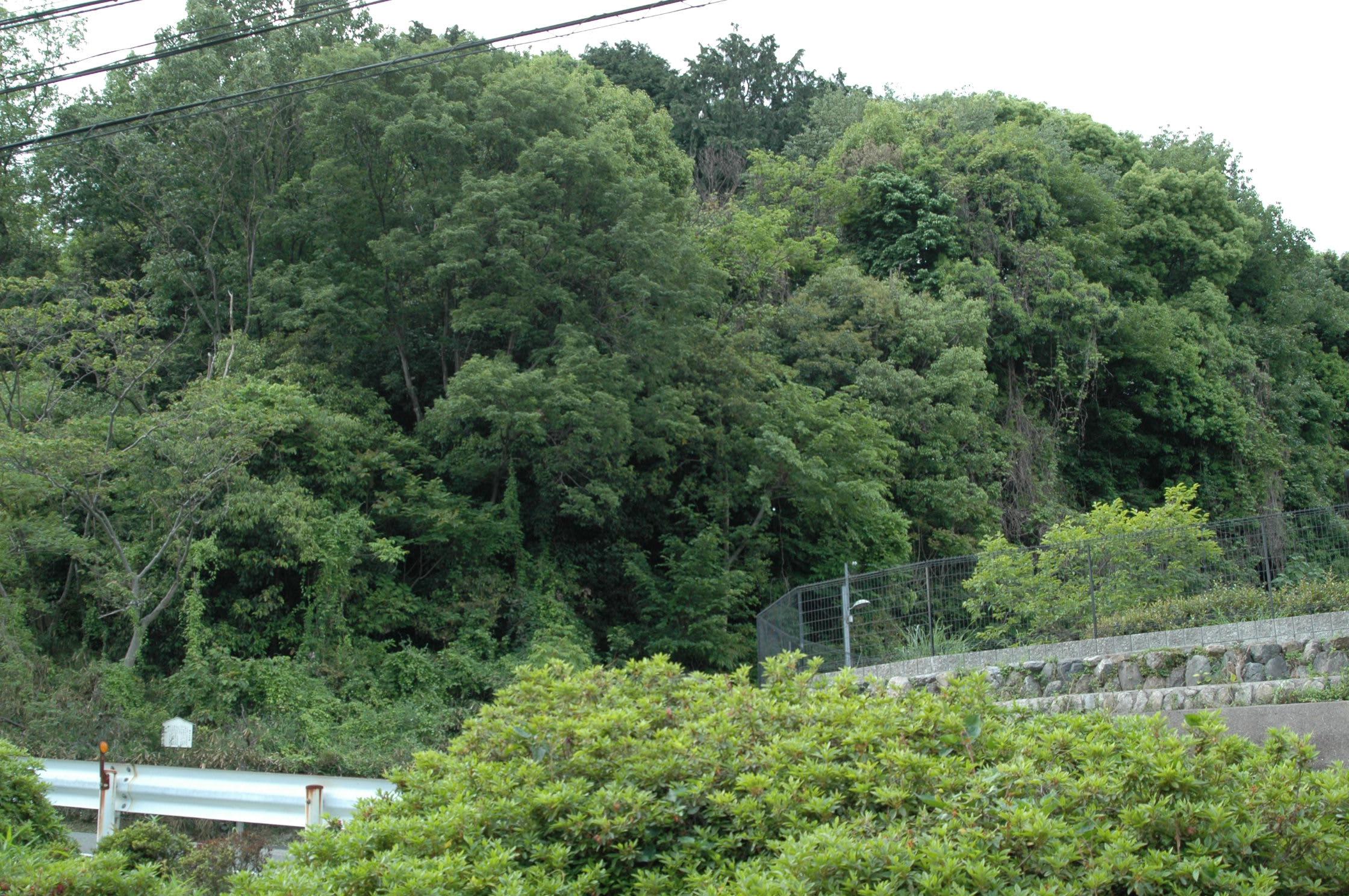 滋賀県大津市・木の岡茶臼山古墳 - 古墳:探訪