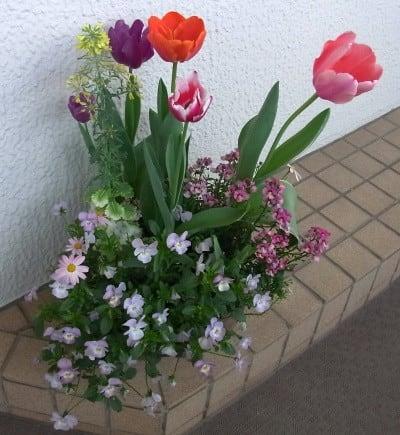 2017年04月22日 4/19 寄せ植え鉢とストックの花